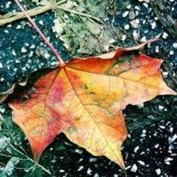 Die Blätter fallen, fallen wie von selbst...